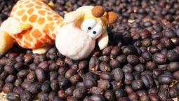 <四季咖啡生豆>衣索比亞 耶加雪菲 雪冽圖G1 日曬處理 每公斤370元新貨到