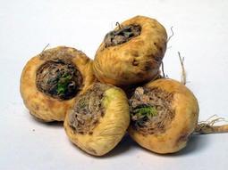 【阿金的便秘花園】Maca 瑪卡 Lepidium meyenii(種子每份20顆120元)M011