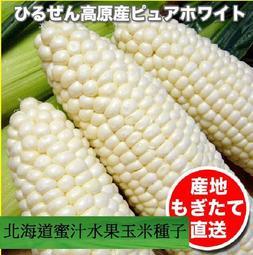 菜根園-北海道蜜汁爆醬水果玉米種子200粒裝350元