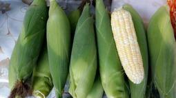 水果玉米 白龍王水果玉米 超甜玉米 有機栽培 玉米 6支橞100元