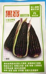 【野菜部屋~】N13 黑寶甜珍珠種子一磅 , 黑糯玉米 , 甜,軟,嫩 , 每包570元 ~