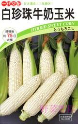 【野菜部屋~中包裝】N15 白珍珠牛奶玉米種子1000 顆 , 日本北海道牛奶水果玉米 , 每包650元(試賣價) ~