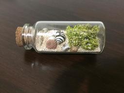 熱銷中‼️ 澎湖 星沙貝類紀念品
