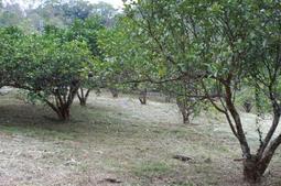 土地出售含柚園